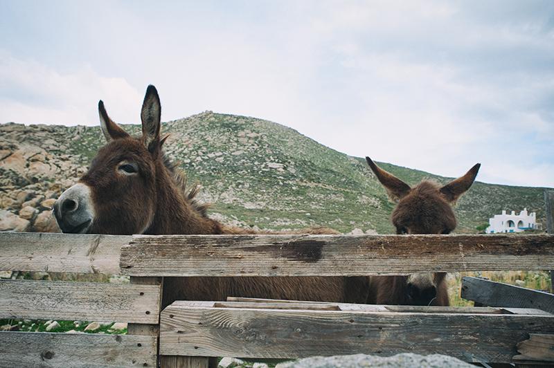 donkey paros